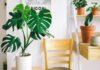 Rośliny doniczkowe do domu